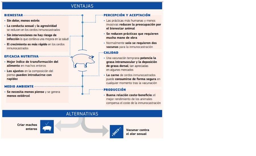 castracio1.jpg